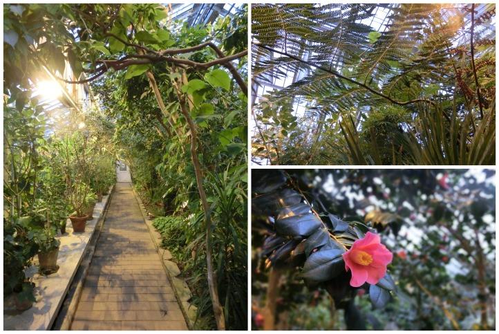palmhouses