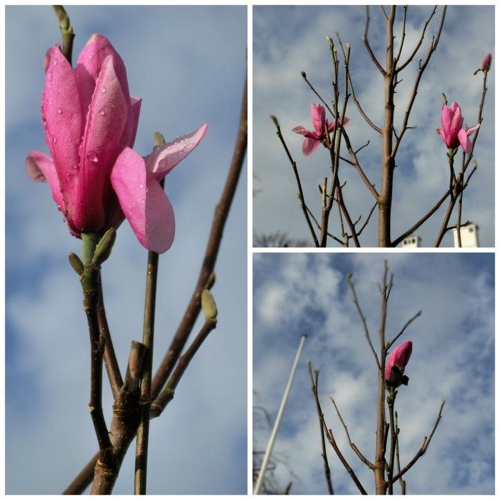 magnolia collage