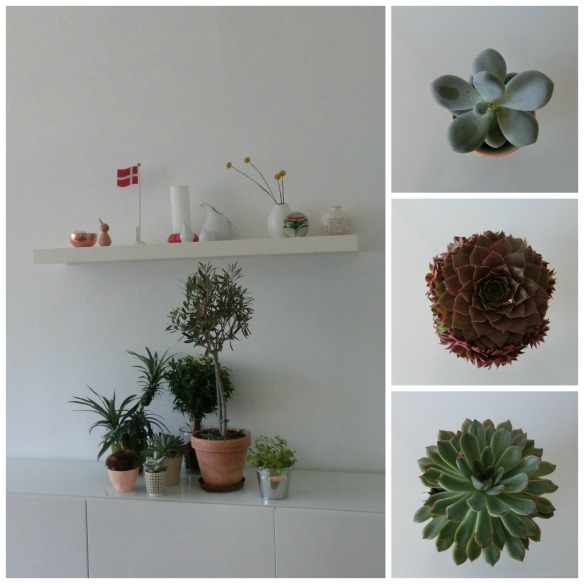 plants collage
