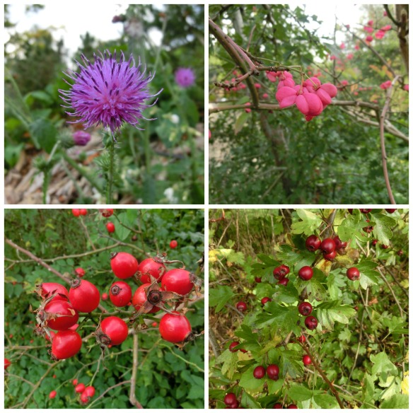frilands berries